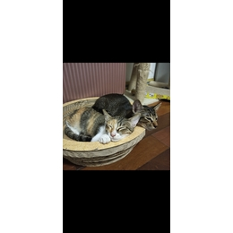 猫咪免费领养