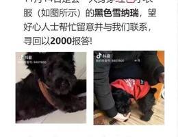 寻犬启示,位于合肥市瑶海区长江...