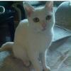 寻求一位爱猫人领养我的小乖