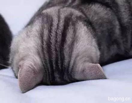 2015可爱猫图集14