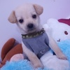 五个月大的小土狗 希望找个爱狗之人 给它一个温暖的家