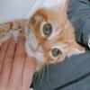 捡到一只橘猫幼猫