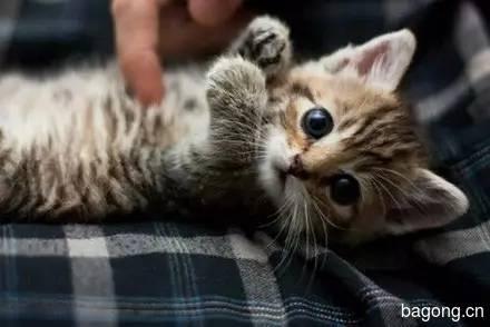 2015可爱猫图集2