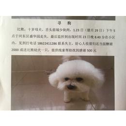白色,十岁母犬,体重五公斤左右...