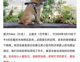 寻狗启示,爱犬Poker(扑克),公...