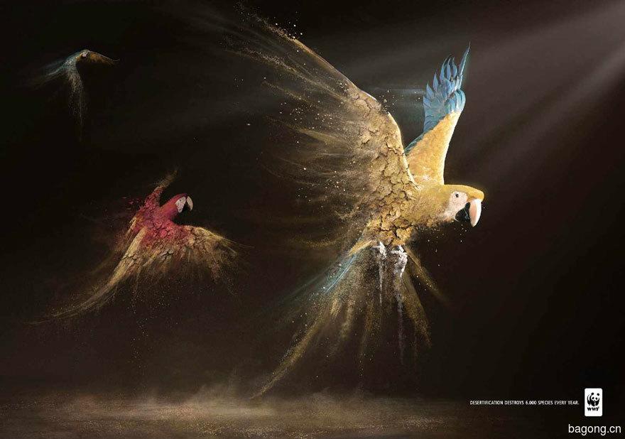 33个动物公益广告震撼人心37
