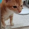 流浪猫捡回家一个月,个人原因养不了