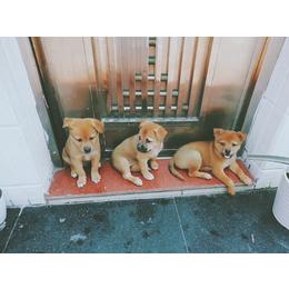 两个月大狗狗免费领养