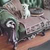 捡到一只走丢的博美狗,希望找到负责的主人不要二次丢弃