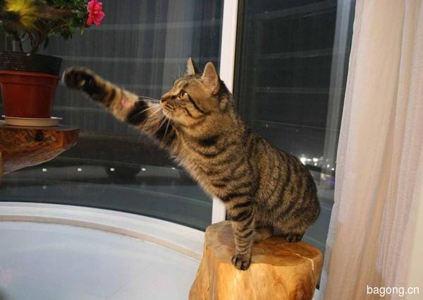 教您快速辨别猫星人品种!!!18