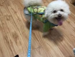 寻狗启示,【酬谢1000元寻找爱犬...