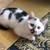 我有一只圆滚滚的小猫求领养