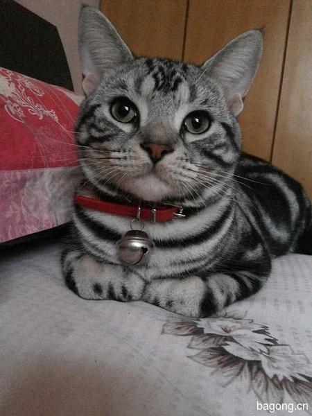 教您快速辨别猫星人品种!!!11