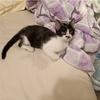 路遇一只应该是被遗弃的小母猫,粘着我不走,求领养
