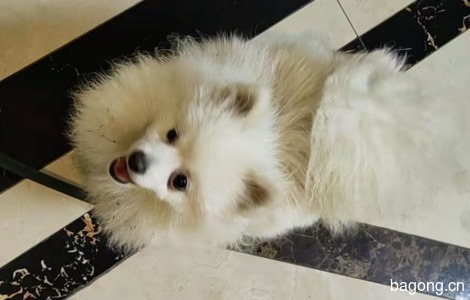 狗狗的右眼比左眼小,如果有好心...