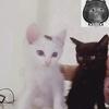两只小奶猫想要找爱它们的主人