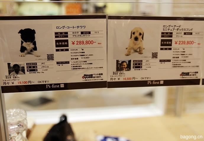 跨国看门道,推敲日本宠物店的经营模式18