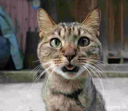 2015可爱猫图集4