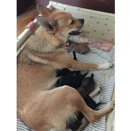 6只小奶狗 求领养