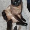 可爱的猫猫找个好主人