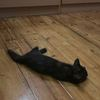 玳瑁猫猫求领养 大概三个多月
