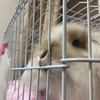 有一种品种好的碎斑兔,武汉好心人领养