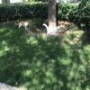 二只一窝半岁猫咪宝贝,每天形影不离,求北京地区一起收养