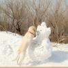 绿色犬语宠物培训中心