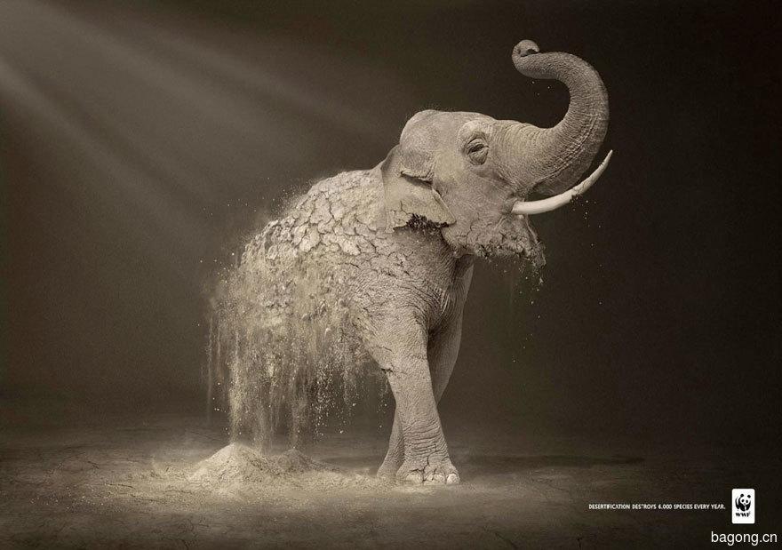 33个动物公益广告震撼人心38