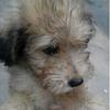 非常可爱的小狗,请爱心人士领养(不收任何费用)