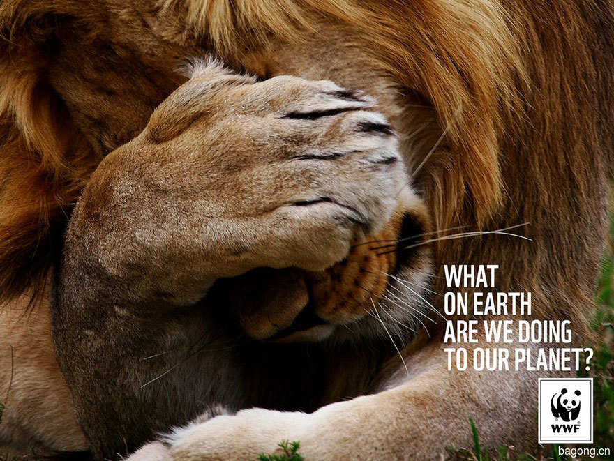 33个动物公益广告震撼人心47