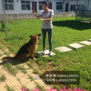 犬之声宠物寄养训练服务