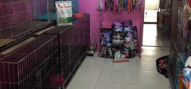 靓酷宠宠物店1