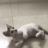 两月大自家养小母猫找爱心人士收养