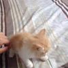求好心人领养一个多月的小奶猫