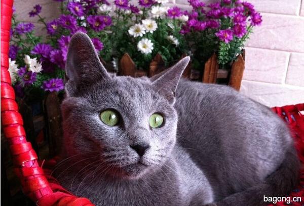 教您快速辨别猫星人品种!!!9