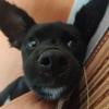 我有一只小狗想找个好人家养