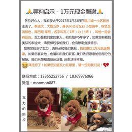 【万元寻爱犬】4-5岁小泰迪,男...