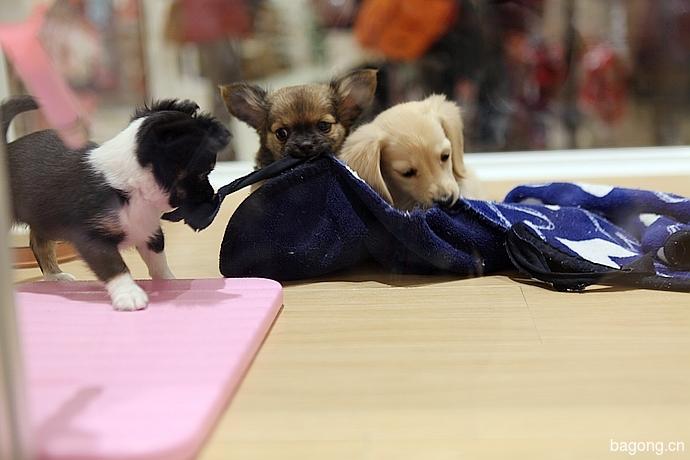 跨国看门道,推敲日本宠物店的经营模式9