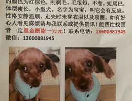 寻狗启示,找到重谢一万元,5月3...