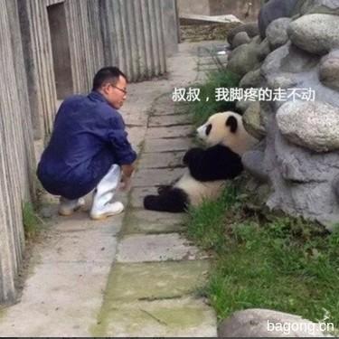 世界上最容易被抱大腿的工作:熊猫驯养师。10