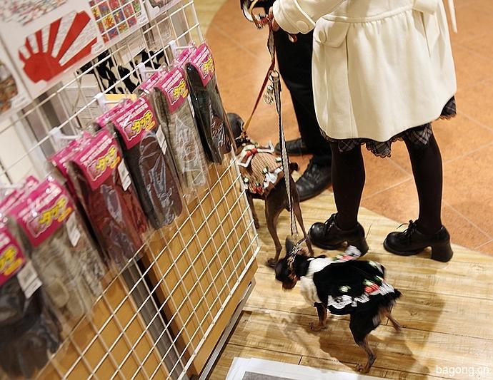 跨国看门道,推敲日本宠物店的经营模式23