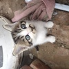 免费送养自家母猫生的小奶猫