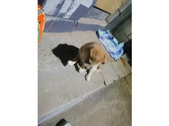 一只几个月大的狗狗寻...