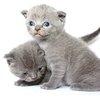 幼猫的营养需求是什么?