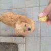 2岁小公狗找妈妈
