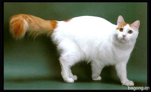 教您快速辨别猫星人品种!!!21