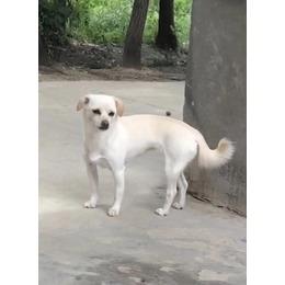 寻狗启示:爱犬叫小米,于11月10...