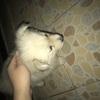 我有一只好看的狗,希望好心人收养它