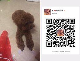 寻狗启示,3000赏金,2019年4月2...